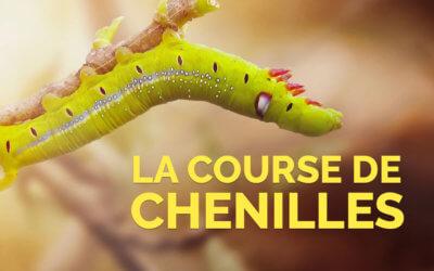 La course de chenilles 🐛